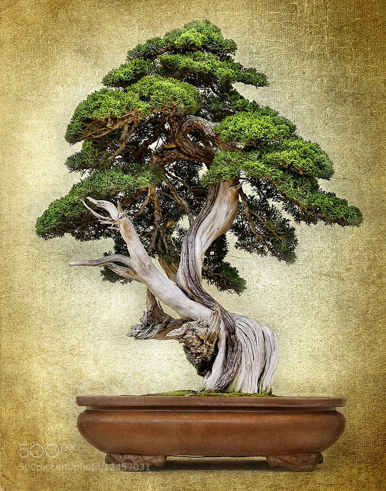 Photograph Bonsai by Bob Jensen on 500px