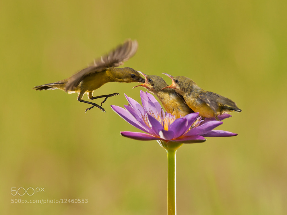 Photograph Mom is here by Iwan Tirtha on 500px
