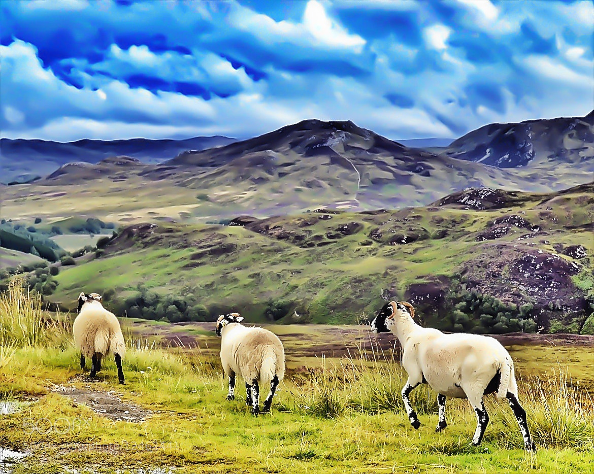 Photograph Wooly wander by Sarah Hughes on 500px