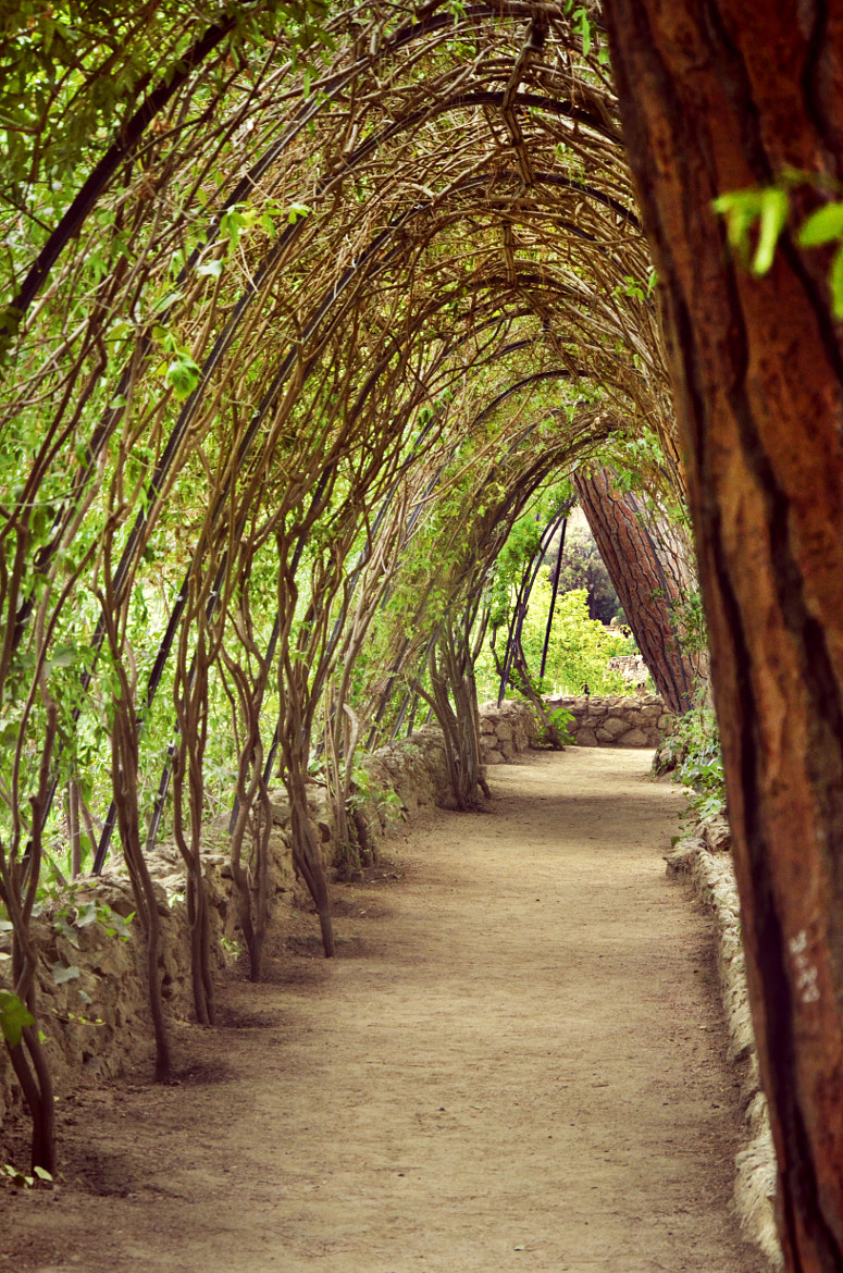 Photograph Gaudi's Path by Raquel Polo on 500px