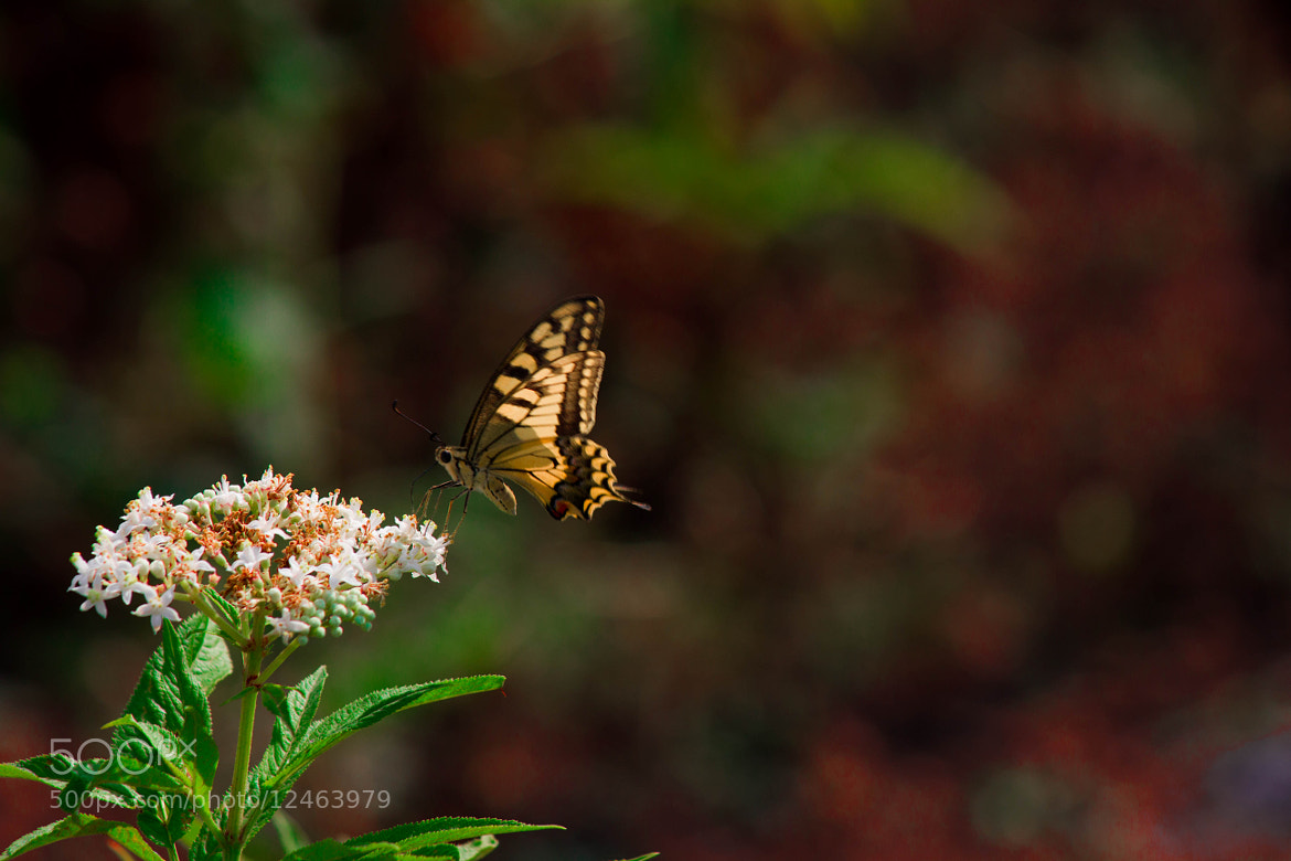Photograph The Butterfly by Ali Samedov on 500px