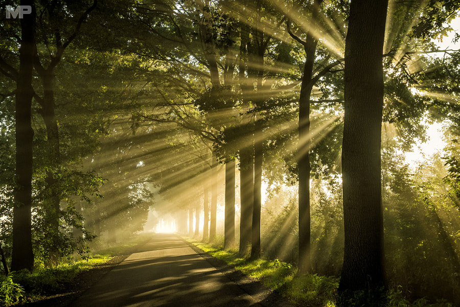 Rays Track by Martin Podt on 500px.com