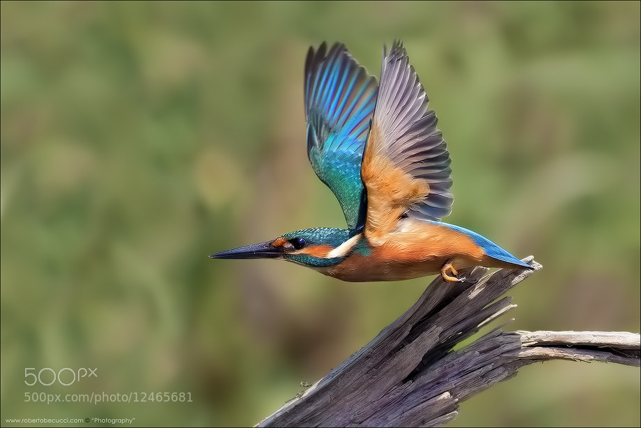 Photograph Flyin' Colors by Roberto Becucci on 500px