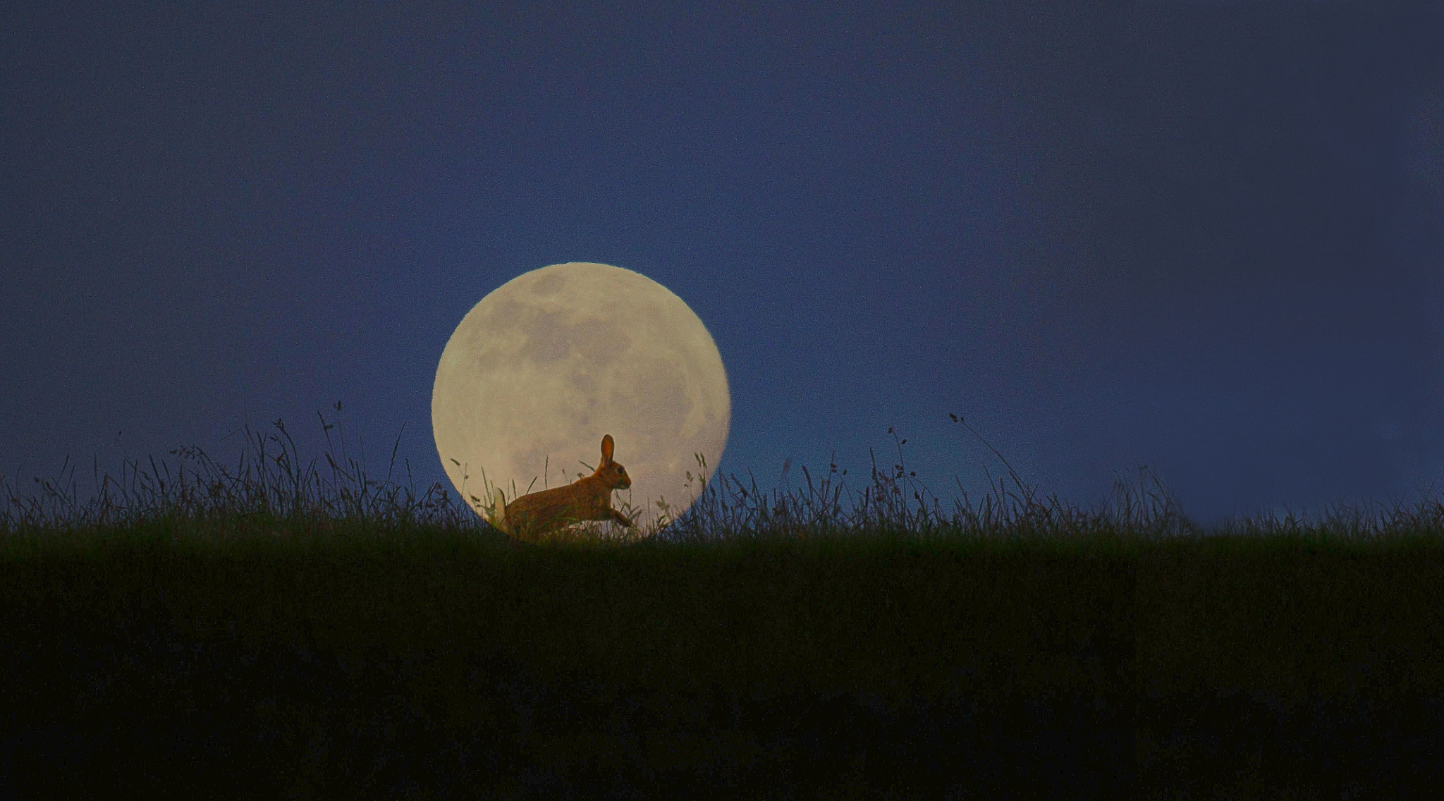 Photograph Rabbit in the Moon by Steve Adams on 500px