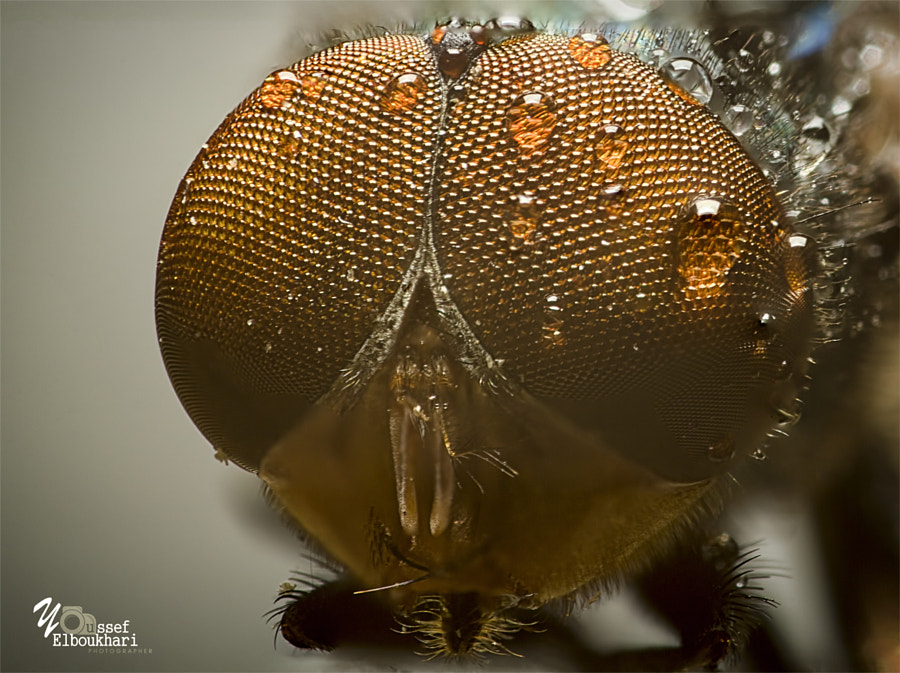 Fly Head by Youssef Elboukhari on 500px.com