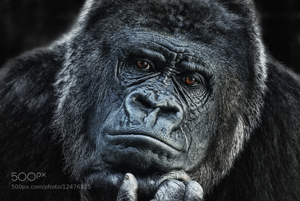 Photograph thinking about U by Joachim G.  Pinkawa on 500px