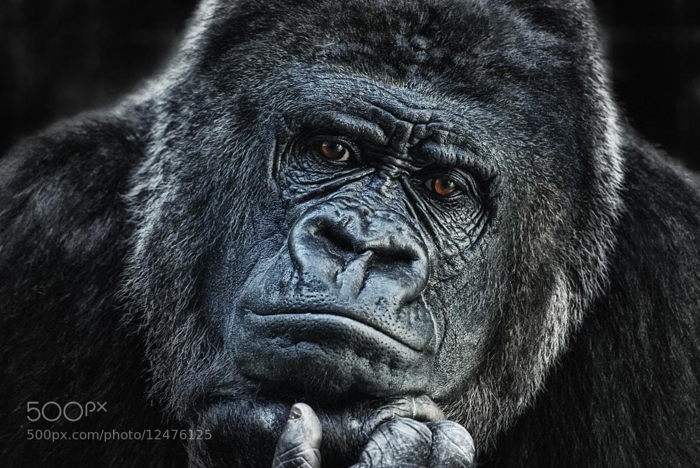 Photograph thinking about U by Joachim G.  Pinkawa on 500px