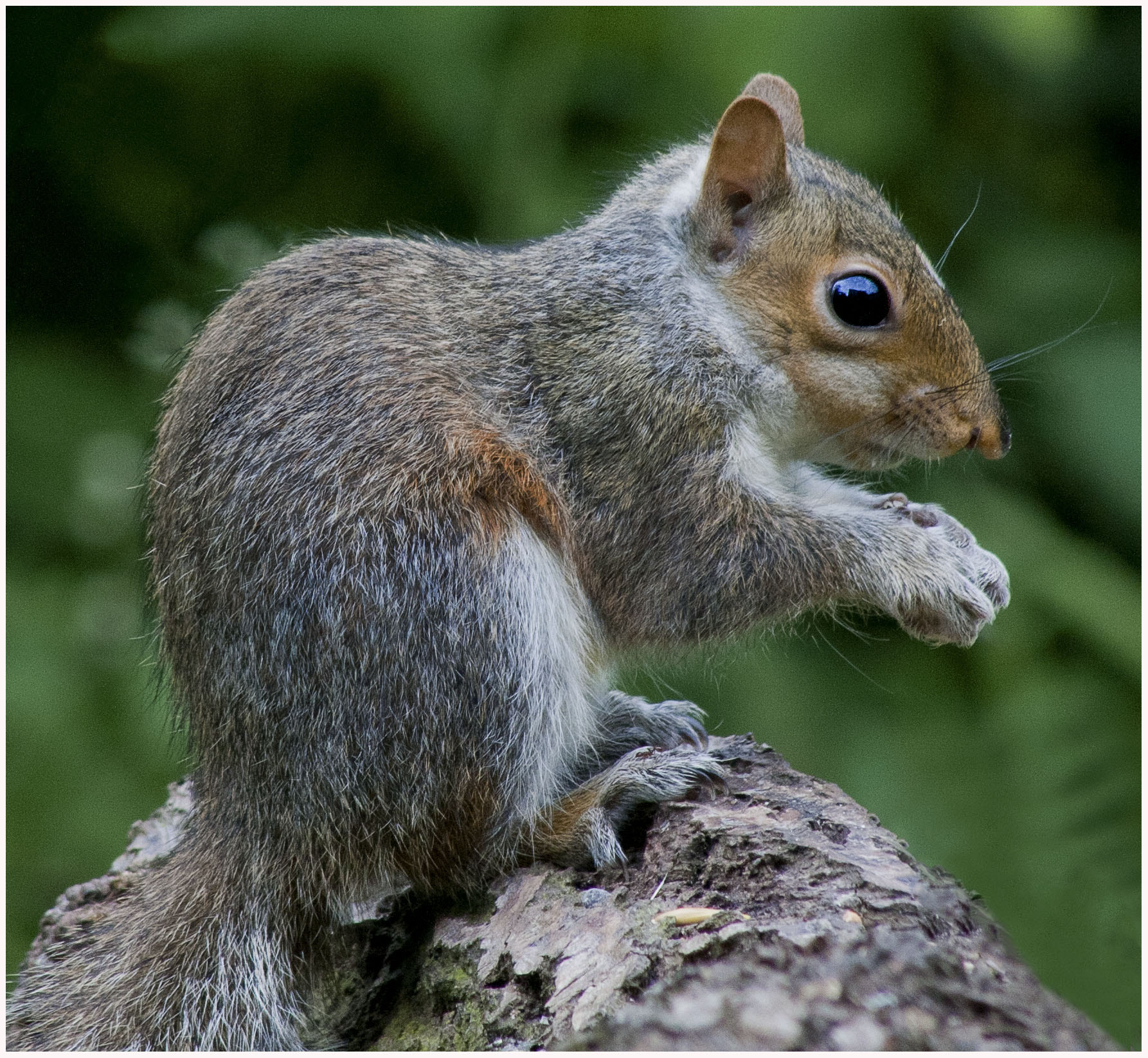 Photograph The Squirrel by Jamie Hyde on 500px