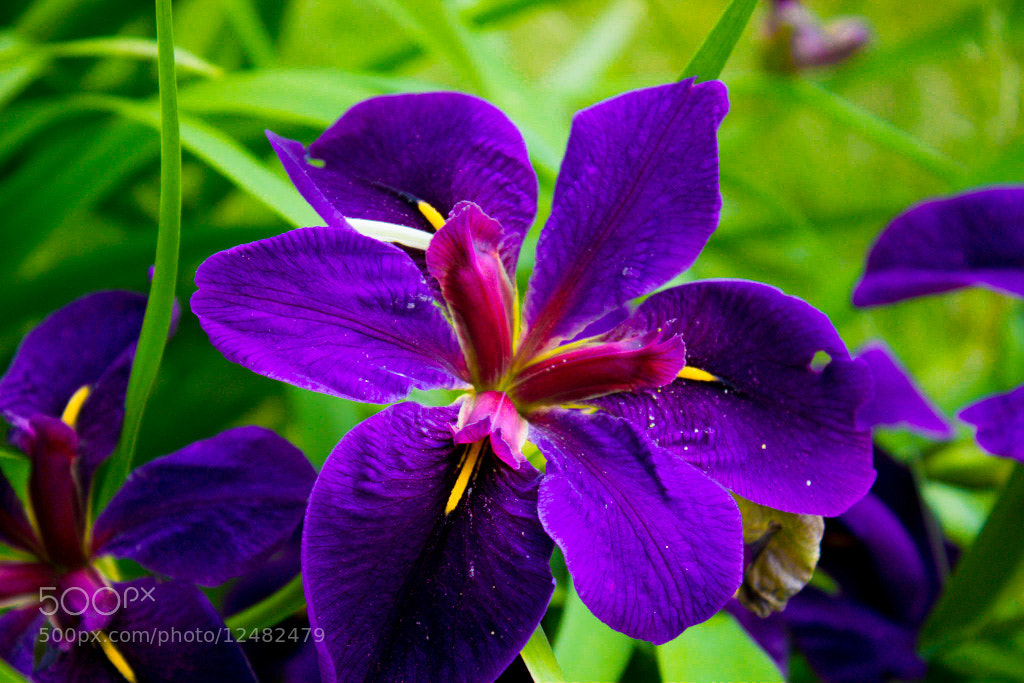 Photograph Flower by Lisa Mirabelle on 500px