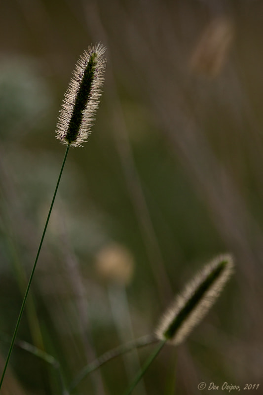 Photograph Grass by Dan Osipov on 500px