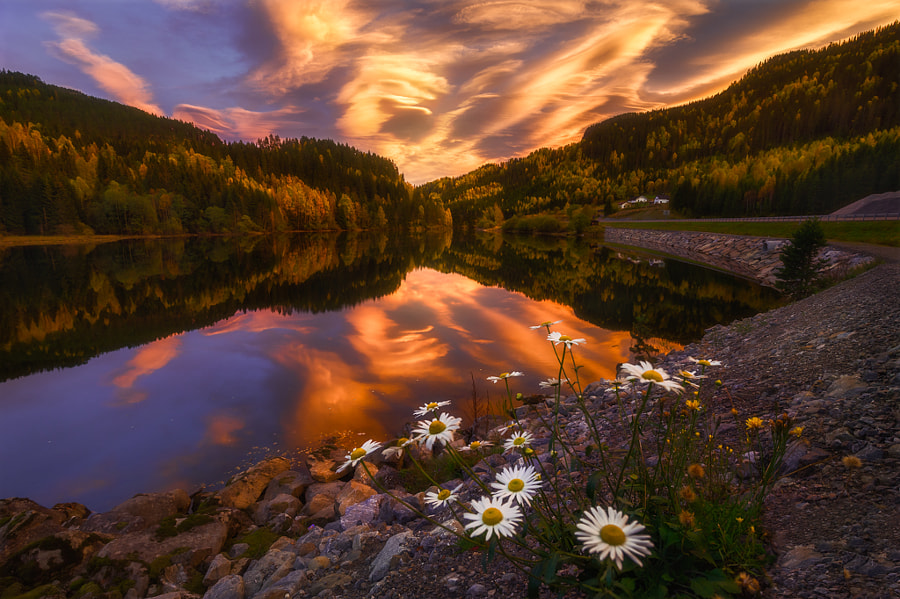 Flower Psychedelia by Ole Henrik Skjelstad on 500px.com
