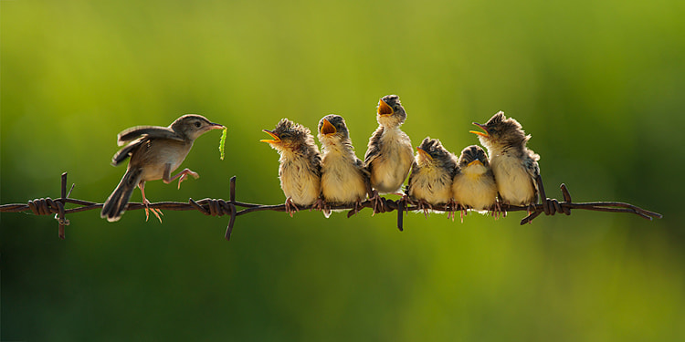 Photograph 16 by Iwan Tirtha on 500px