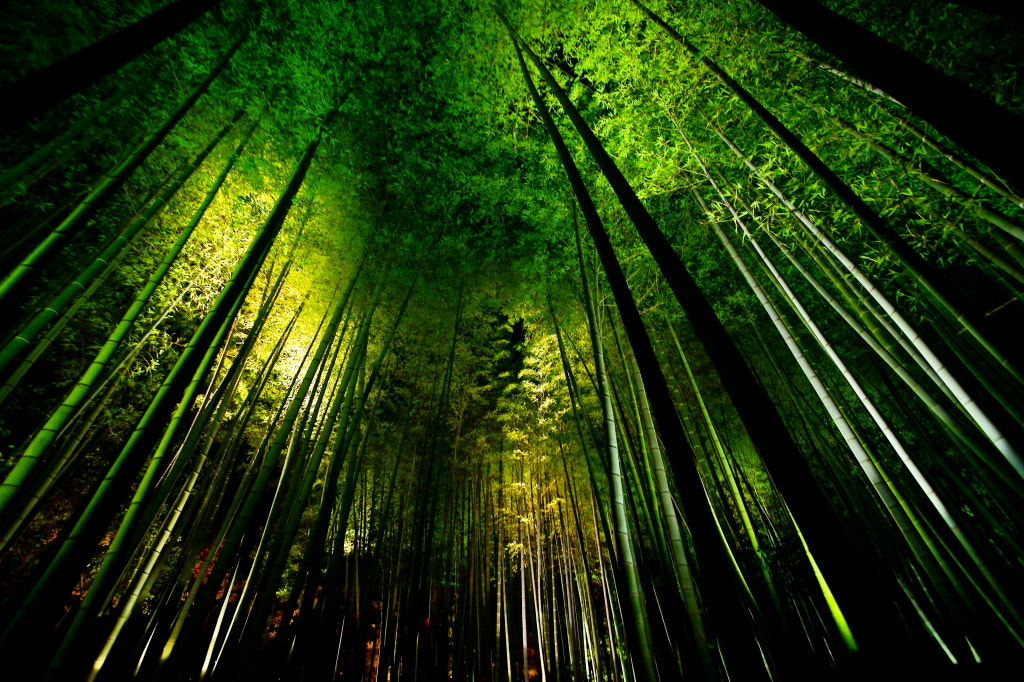 Photograph Bamboo Night 2011 by Takeshi Marumoto on 500px
