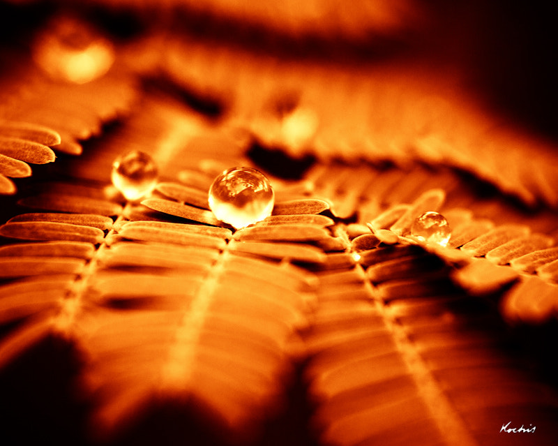 Photograph Fire leaf by Randy Kochis on 500px