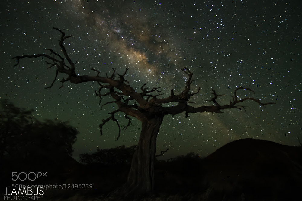 Photograph Reaching for the Stars by Joshua Lambus on 500px
