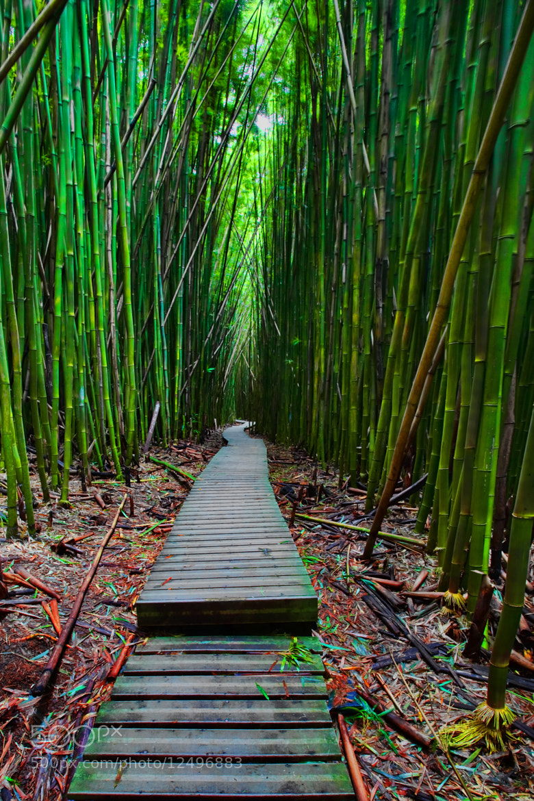 Photograph Pathway Within by Warren Ishii on 500px