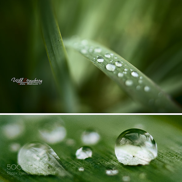 Photograph dew by Mariana Mikhailova on 500px