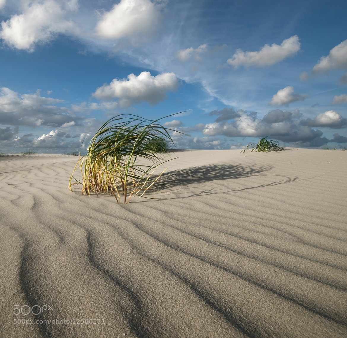 Photograph Wild Beach by Daniel Bosma on 500px