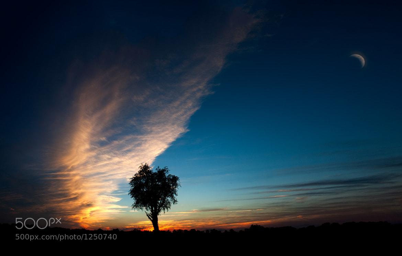 Photograph Last Tree by Brad Denny on 500px