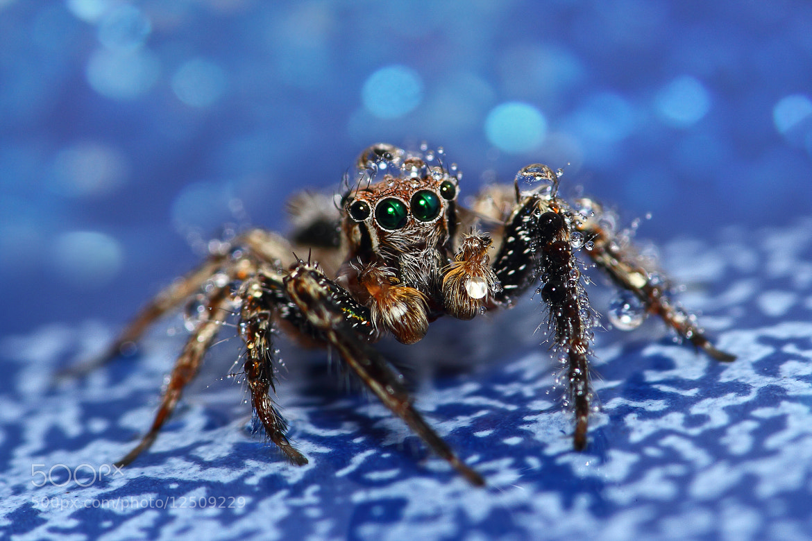 Photograph Jumping spider 14 by Prayunsak Khrueakham ai on 500px