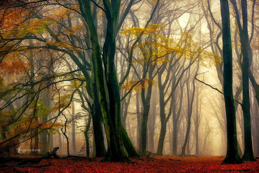In Love with Fall by Lars van de Goor on 500px.com