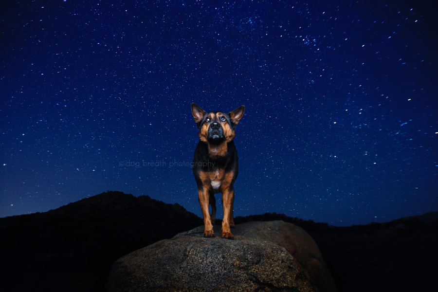 Under the Stars by Kaylee Greer on 500px.com