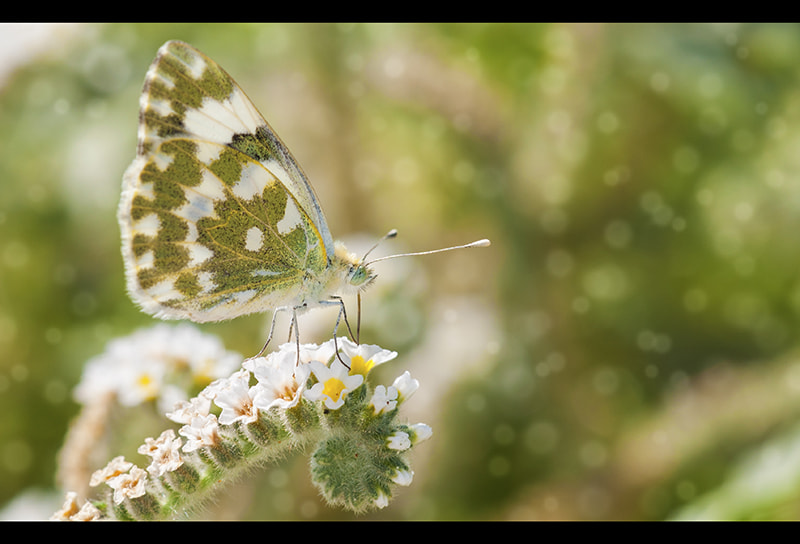 Photograph Beauty 6 by Can Tunçer on 500px