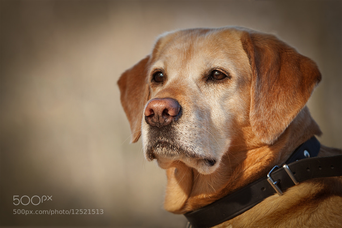 Photograph a day without a dog .. by Mathias Ahrens on 500px