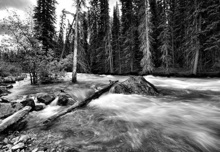 Photograph Running Stream - Black and White by Yves Gagnon on 500px