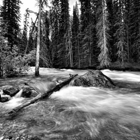Running Stream - Black and White by Yves Gagnon (YvesGagnon)) on 500px.com