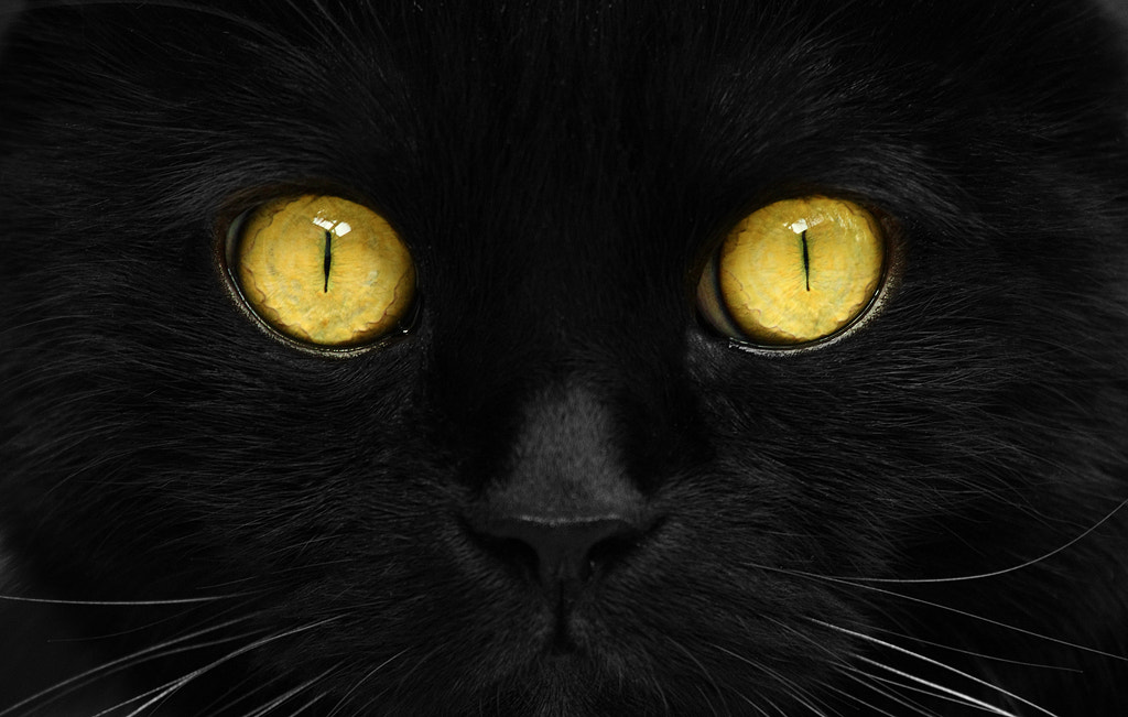 Photograph cats by Levin Dieterle on 500px