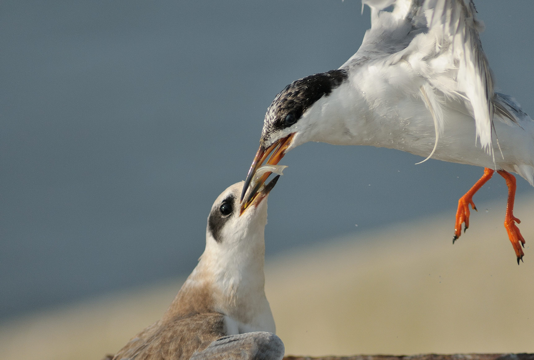 Photograph Feeding Time by Mark Schwall on 500px