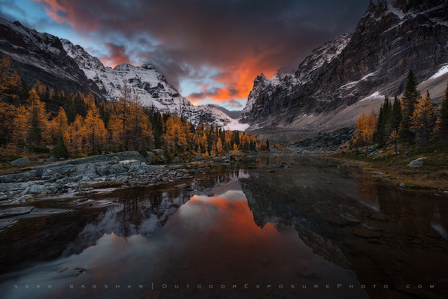 Gold Rush by Sean Bagshaw on 500px.com