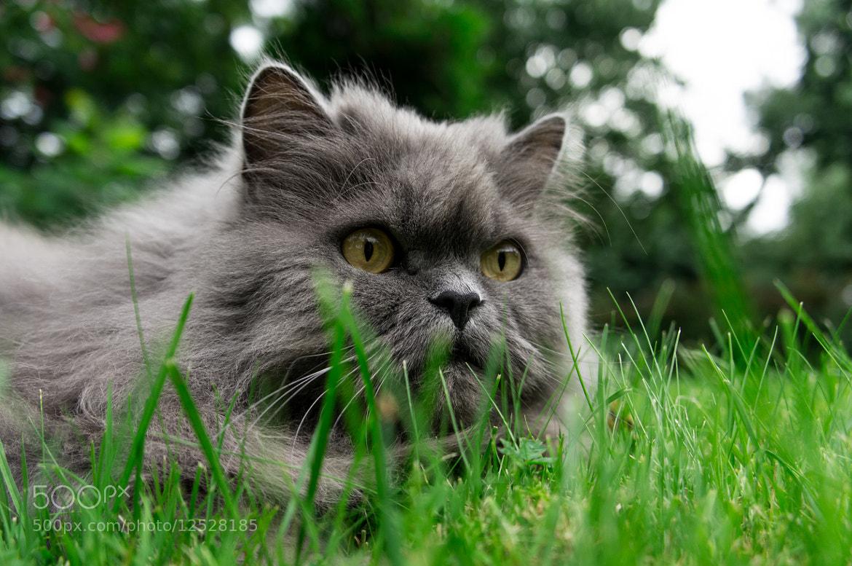 Photograph A cat by Ivar Krustok on 500px