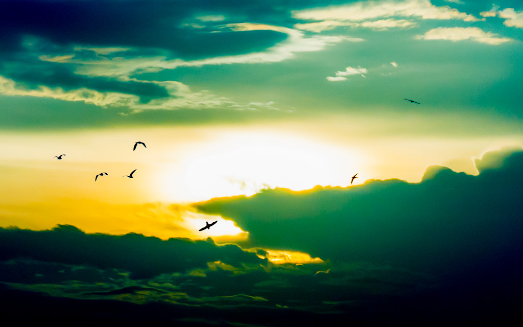 Photograph Birdy Sky by Chinh Phung on 500px