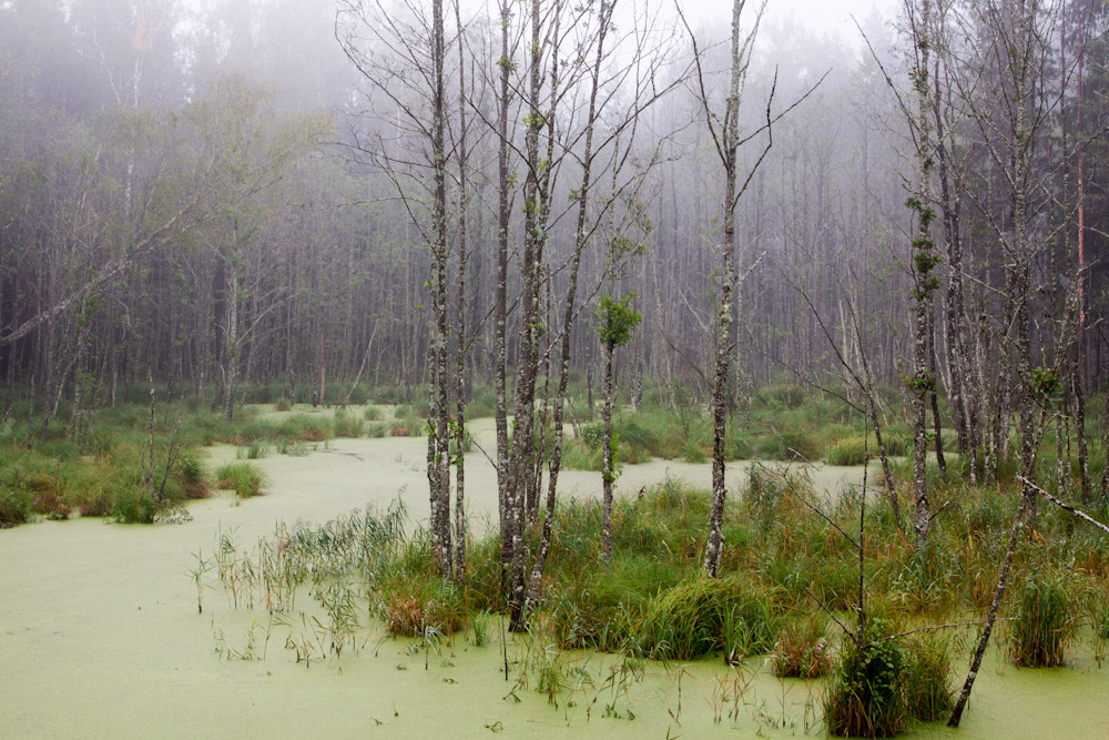 Photograph Swamp by Mindaugas Ma on 500px