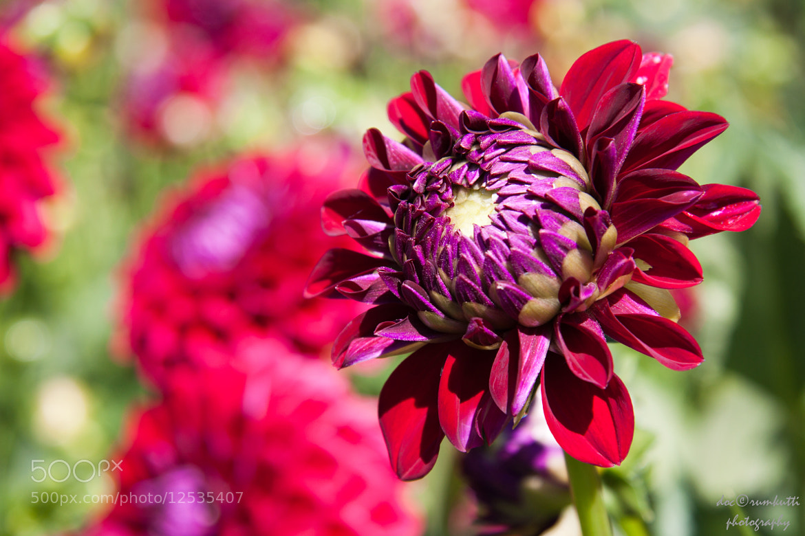 Photograph sunshine flowers by Axel K. on 500px