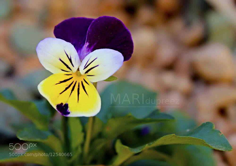 Photograph Spring purple by Mari du Preez on 500px