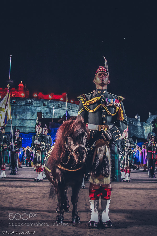 Photograph The Royal Regiment mascot, Shetland pony Cruachan III  (aged 23) has now retired after 19 years of m by Richard Findlay on 500px