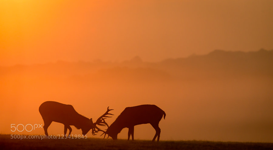 Red Deer Dump >> Dawn Duel By Bridgephotography The Dump