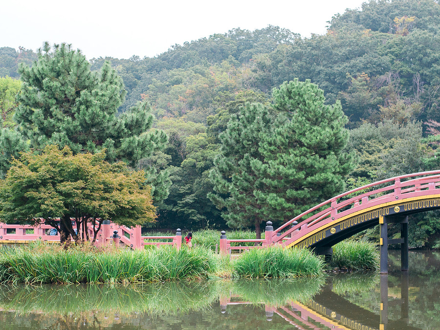 Jodo-style garden with arched and flat bridges over the pond
