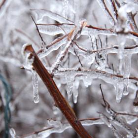Photograph Frozen by Lukas Bachschwell