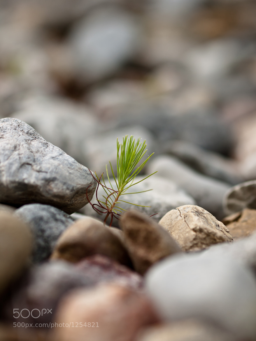 Photograph Life Finds a Way by Andy Whitfield on 500px