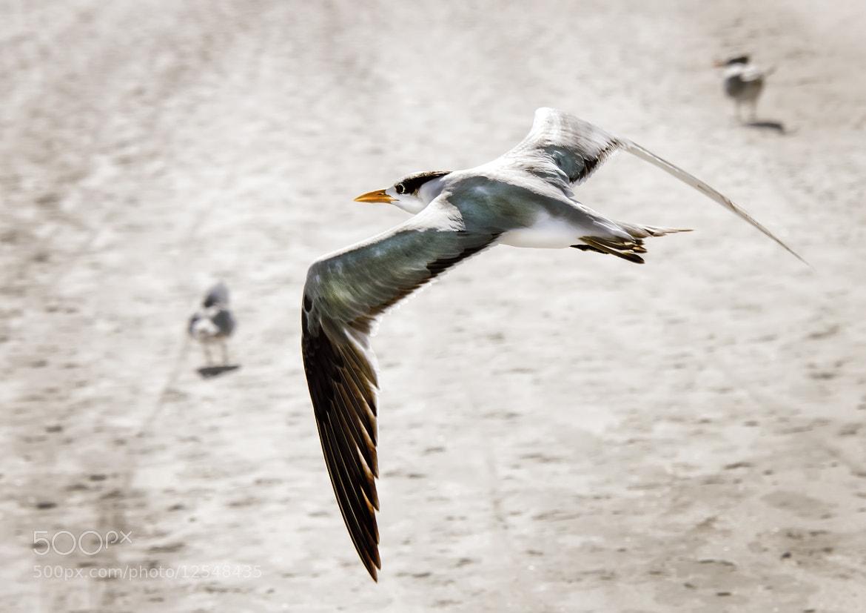 Photograph Flight  by Gouzel  on 500px