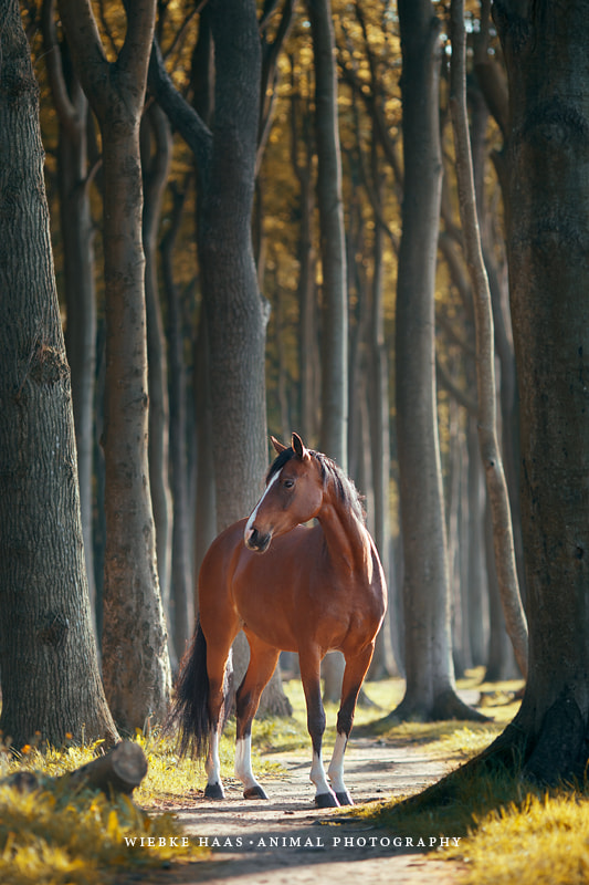 horse photography - Deep In The Woods by Wiebke Haas on 500px.com
