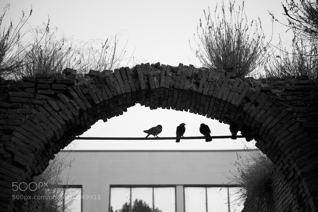 Photograph the Birds by Alex Kom on 500px