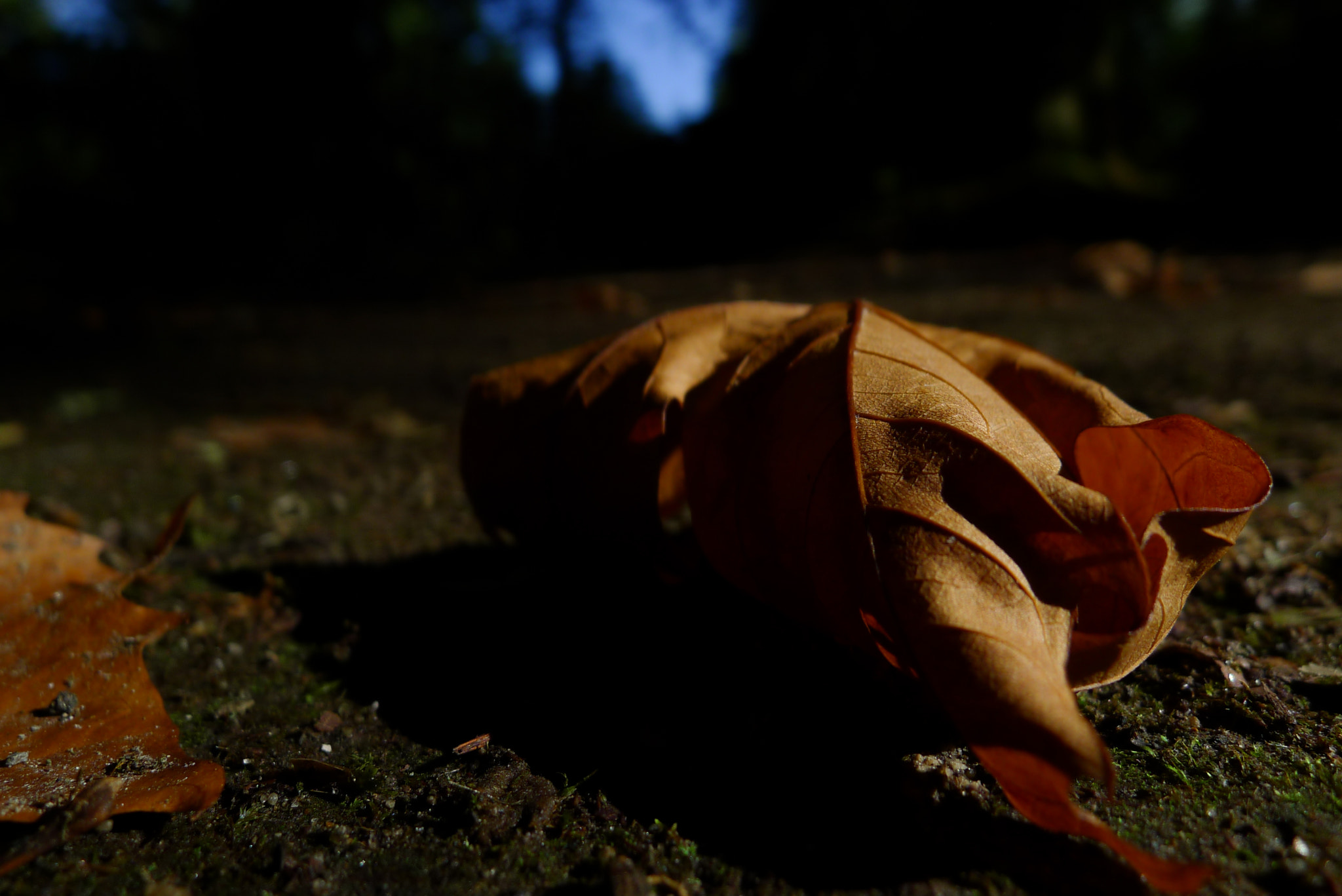 Photograph Autumn_is_comming by André Medeiros on 500px