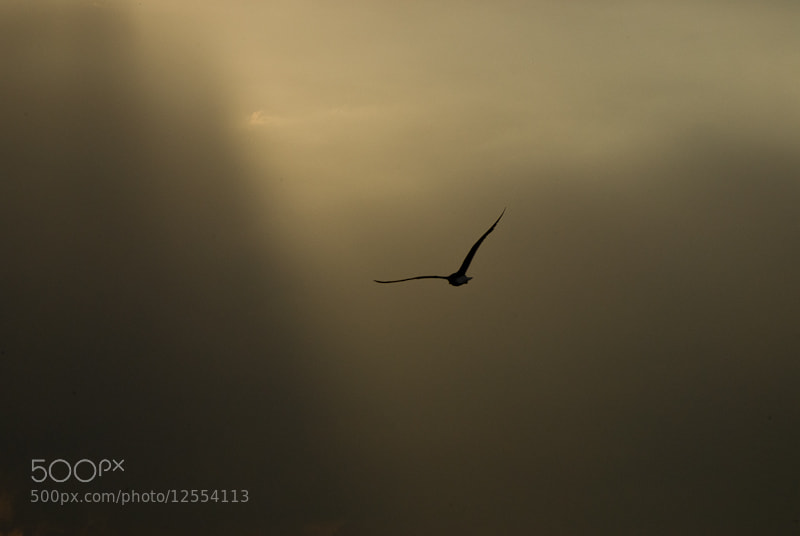 Photograph Seagull abstract by Yiannis Issaris on 500px