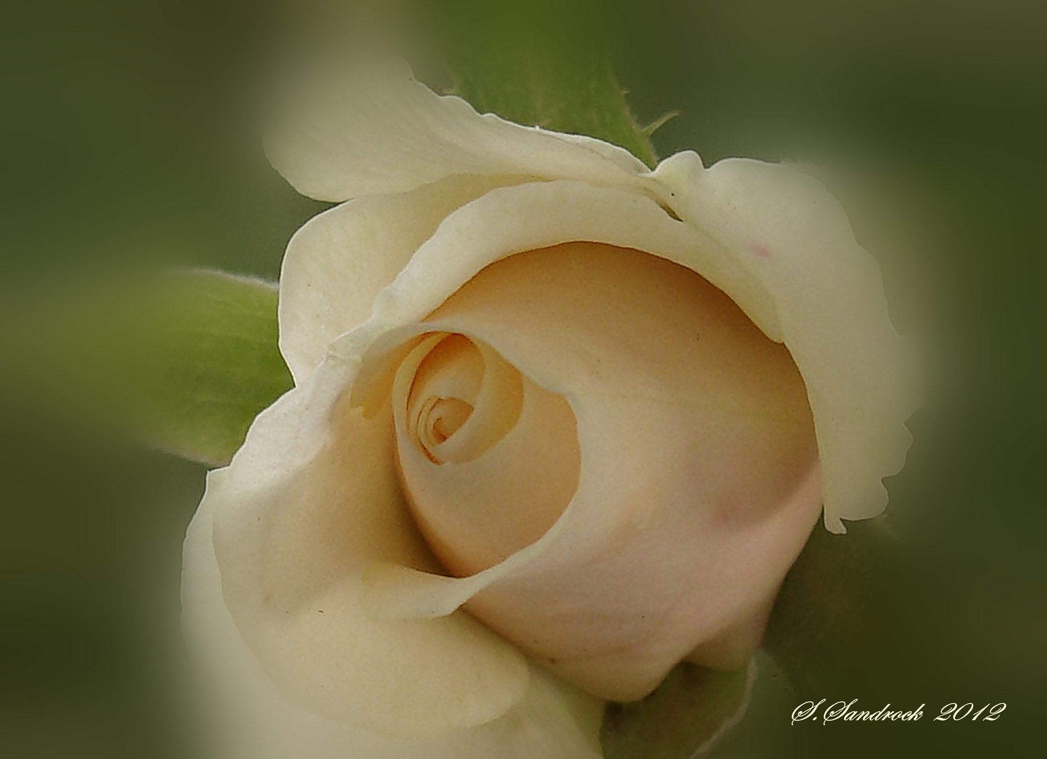 Photograph Creamy White. by Silvia Sandrock on 500px