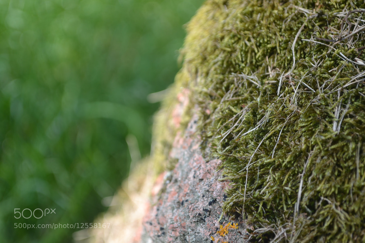 Photograph Mossy Rock by Alex  on 500px